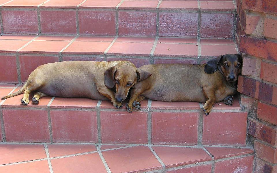 Собаки, получившие ВНЖ в Испании